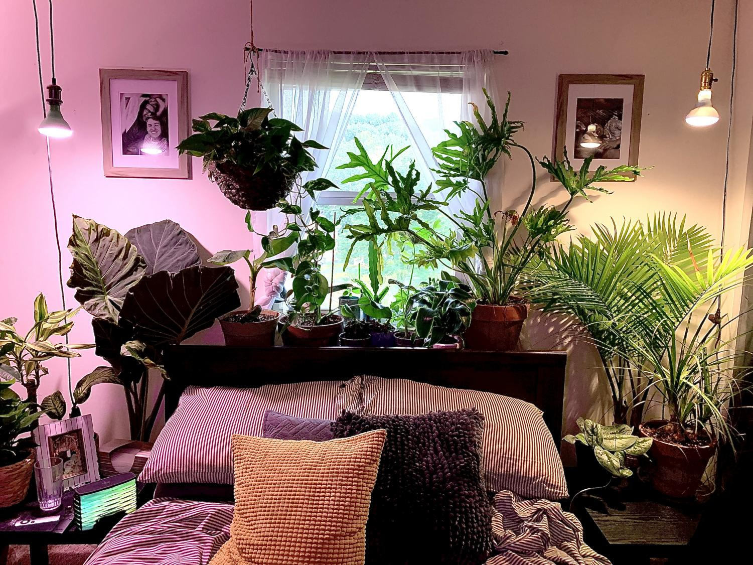 The plant-filled apartment of Cody Hagerman, a junior environmental science major.