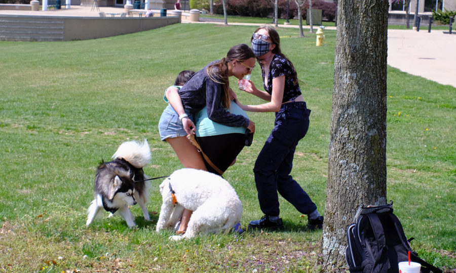 Kenna Davidson, junior, helps untangle Lauren Tennyson, freshman, and Megan Newton, senior, after their dogs wrapped them up. They were tied up after Steel, Tennyson's dog, came loose from his leash and met Mini, Newton's dog, in the center of The Quad.