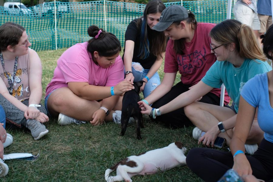 Students play with two of the puppies in the quad Wednesday.