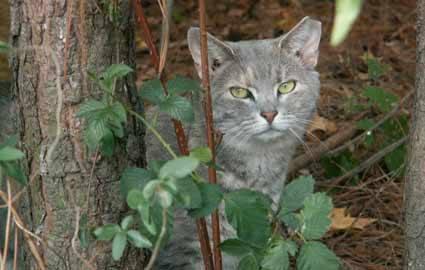 Campus community challenges feral cat procedure