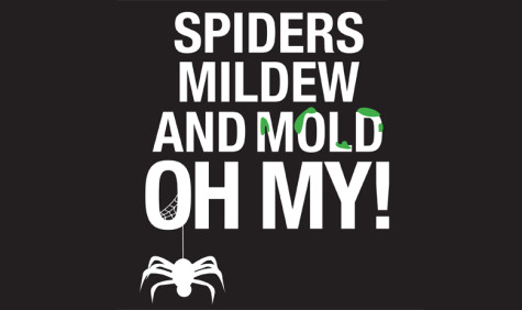 Mold, venomous spiders concern campus residents